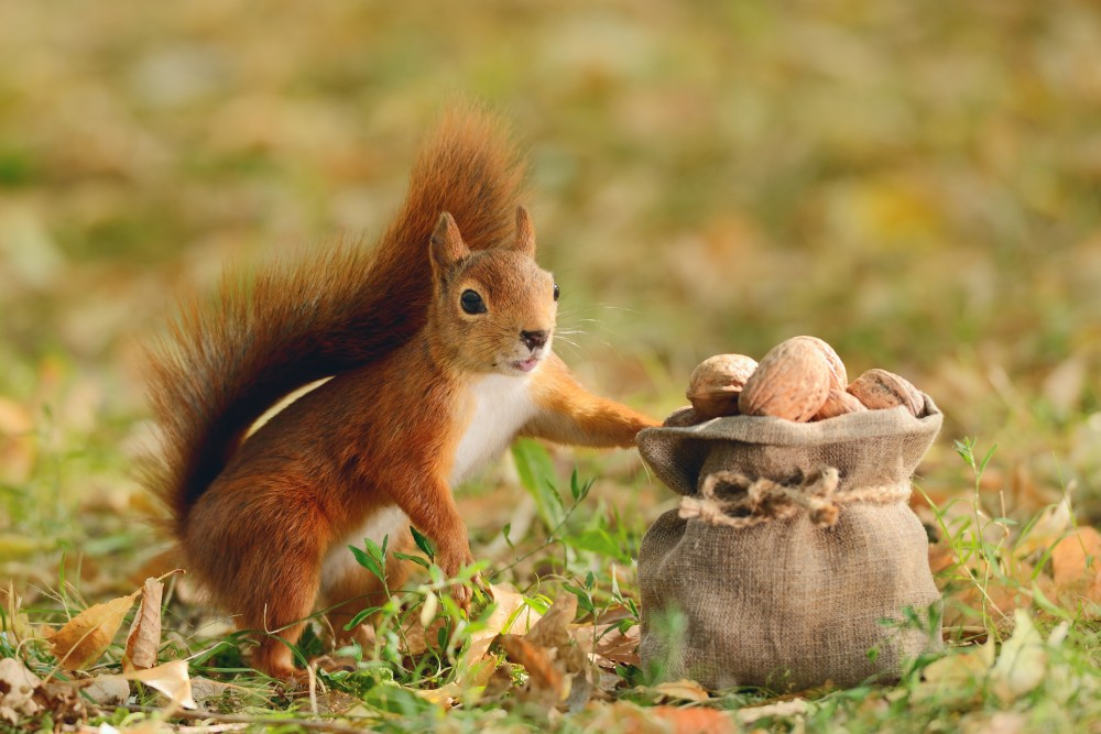 Are squirrels sabotaging your marketing strategy?